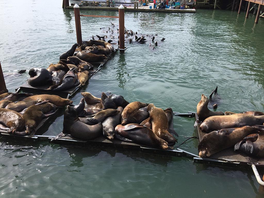 Bayfront Sea Lions