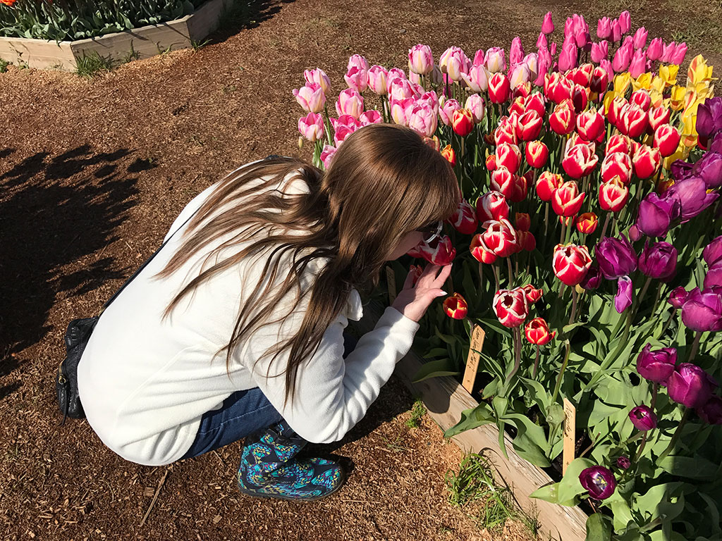Mumzies Checking Out Tulips
